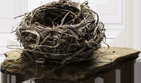 animikii ozoson nest logo